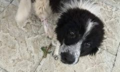 Bucur - 3 month old male