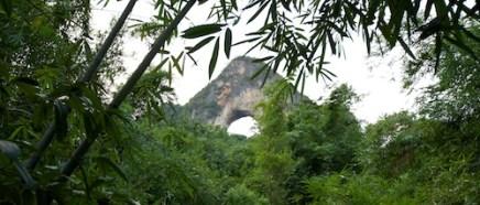 sumatra-1.jpg