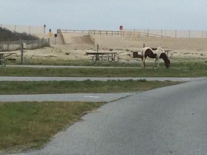 Wiiiild Horses pam langley matt langley eurovan travels