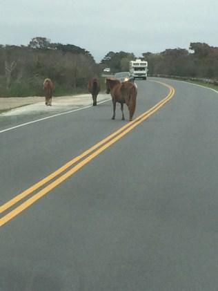Horses strolling
