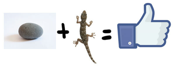 Rock+lizard