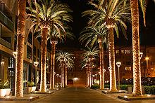 San Jose, California palm trees