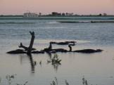Hippos in the Okavango