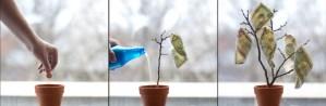 Plant a Kindness Idea Grant