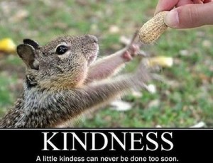 kindness squirrel