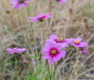 MKRO nature flower