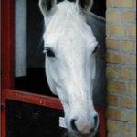 hest_stalddoer
