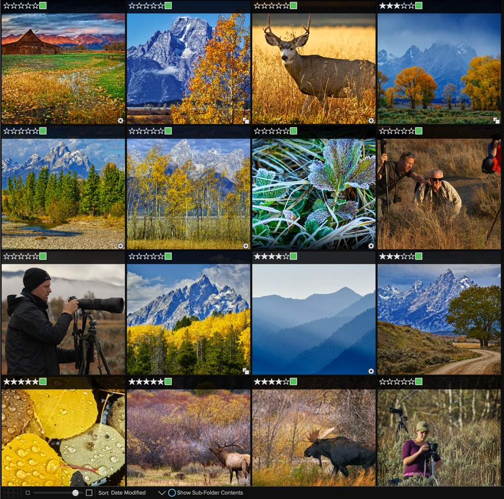 Choose to view square thumbnails of your photos in Browse.