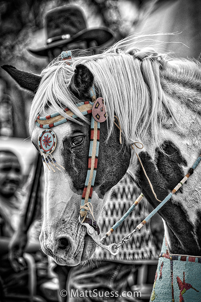 The 97th annual crow fair powwow, parade, rodeo and celebration in Crow Agency, Montana.