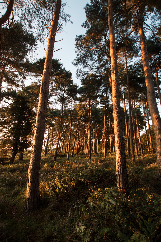 WoodlandglowChillesford