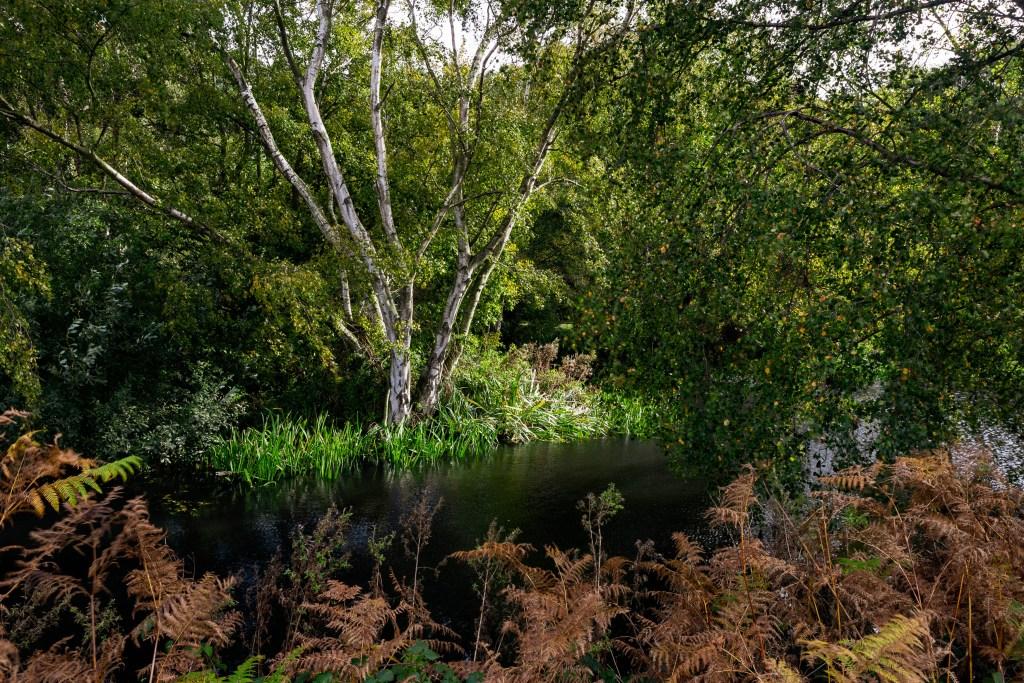 Evolution, Suffolk