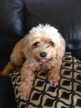 Our beloved dog Yoshi