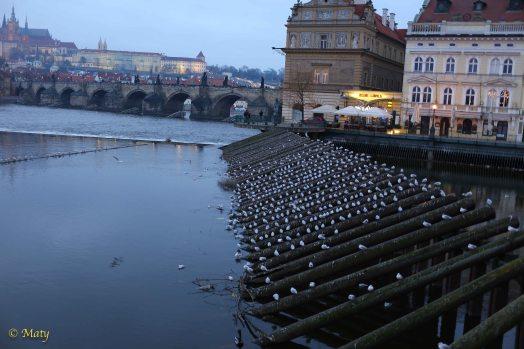 Winter 2015 Vacation - Prague, Czech Republic, January 2015 456