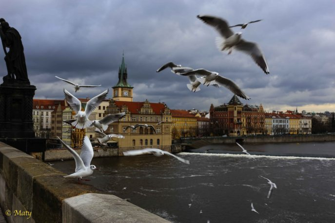 """It is like in the movie """"Birds"""" - they are attacking me.. or the bread — in Prague, Czech Republic"""