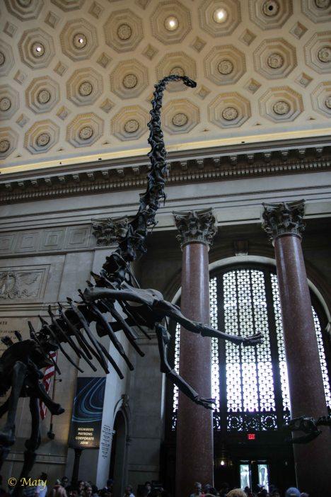Barosaurus rearing up to protect its young from an attacking Allosaurus.