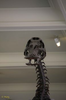 Hello! Welcome to the Museum of Natural History