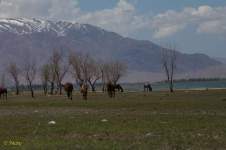 mountains, lake and horses... paradise
