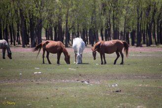 more horses...