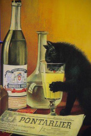 Alcoholic cat