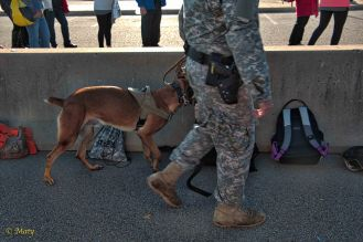 and all the bags are inspected by the military working dog