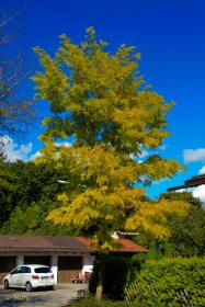 Now this leafs are yellow - Fall is coming!