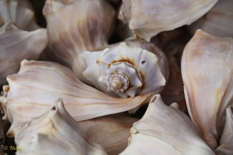 Seashell - in color