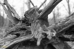 Tree Trunk - take 6
