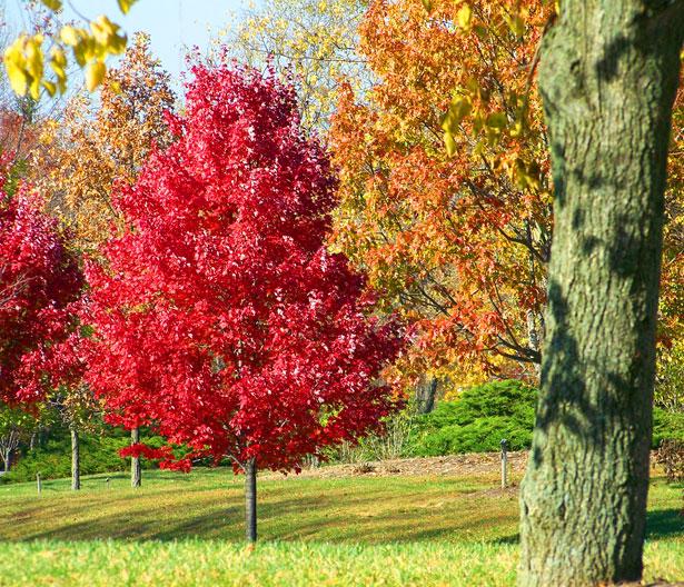 autumn trees young gardener