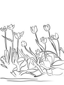 21_tulip_mm