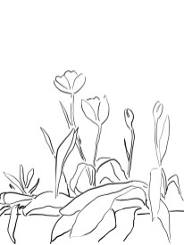 TALKING WITH THE TULIPS, 2020, series of digital drawings.