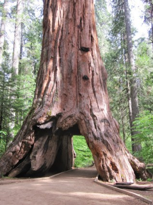 cabin tree