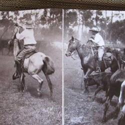 Makawao_Rodeo_History