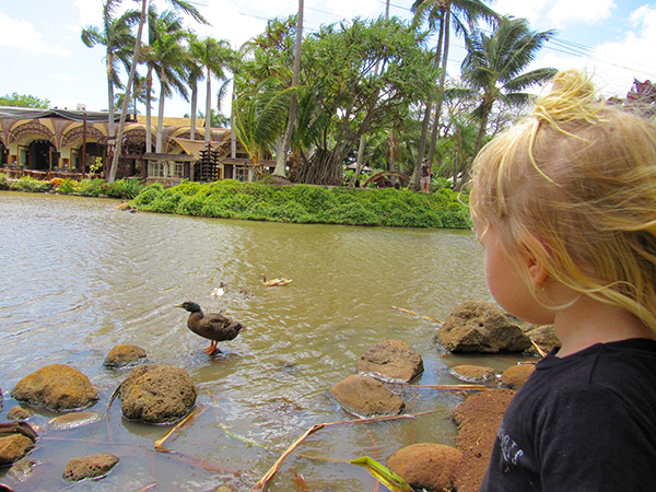 Maui_Toddler_Ducks