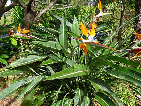 Hiking_On_Maui_Birdofparadise