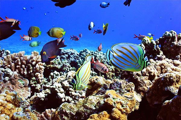 BestViews_Underwater