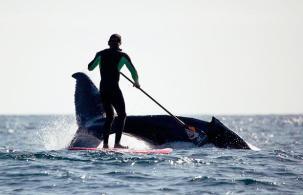 paddle-board-whale_1486470i