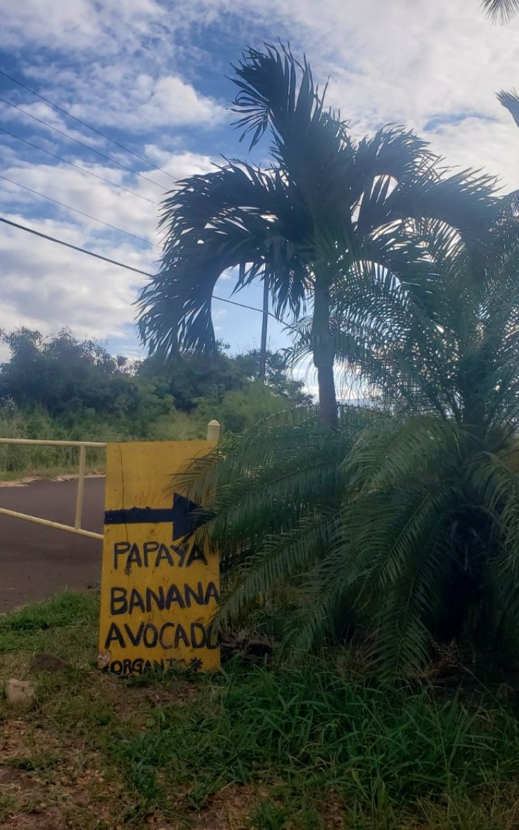 Maui Taco Loco food truck garden entrance - papaya banana avocado sign