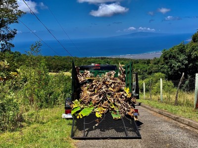 green waste removal maui