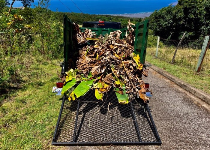 maui rent yard clean up waste trailer