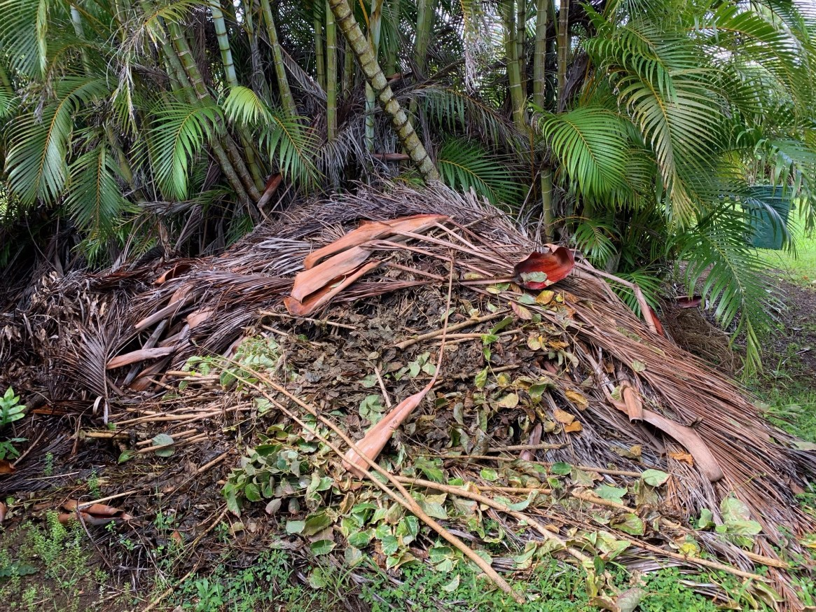 tree trimmings green waste haul away maui