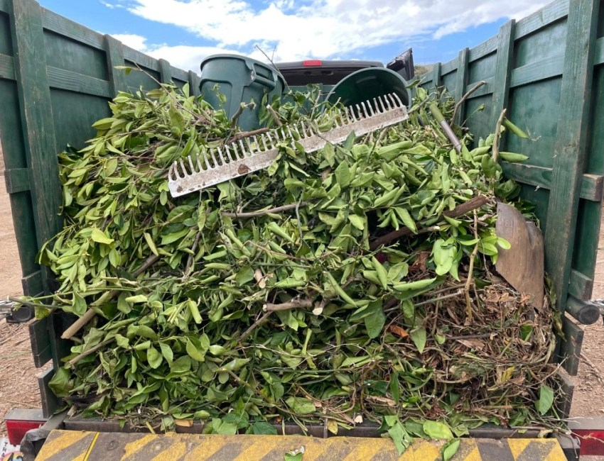 maui yard waste removal hauling recycling