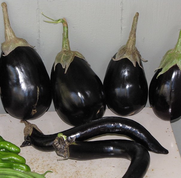 eggplant fruit in a variety of shapes