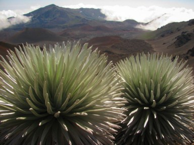 """""""...the tie-ribs of earth lay bare before us. It was a workshop of nature still cluttered with the raw beginnings of world-making."""" wrote Jack London about Haleakalā Crater. Photo by Forest and Kim Starr."""