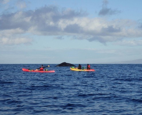 Makena Whale Kayak Tour