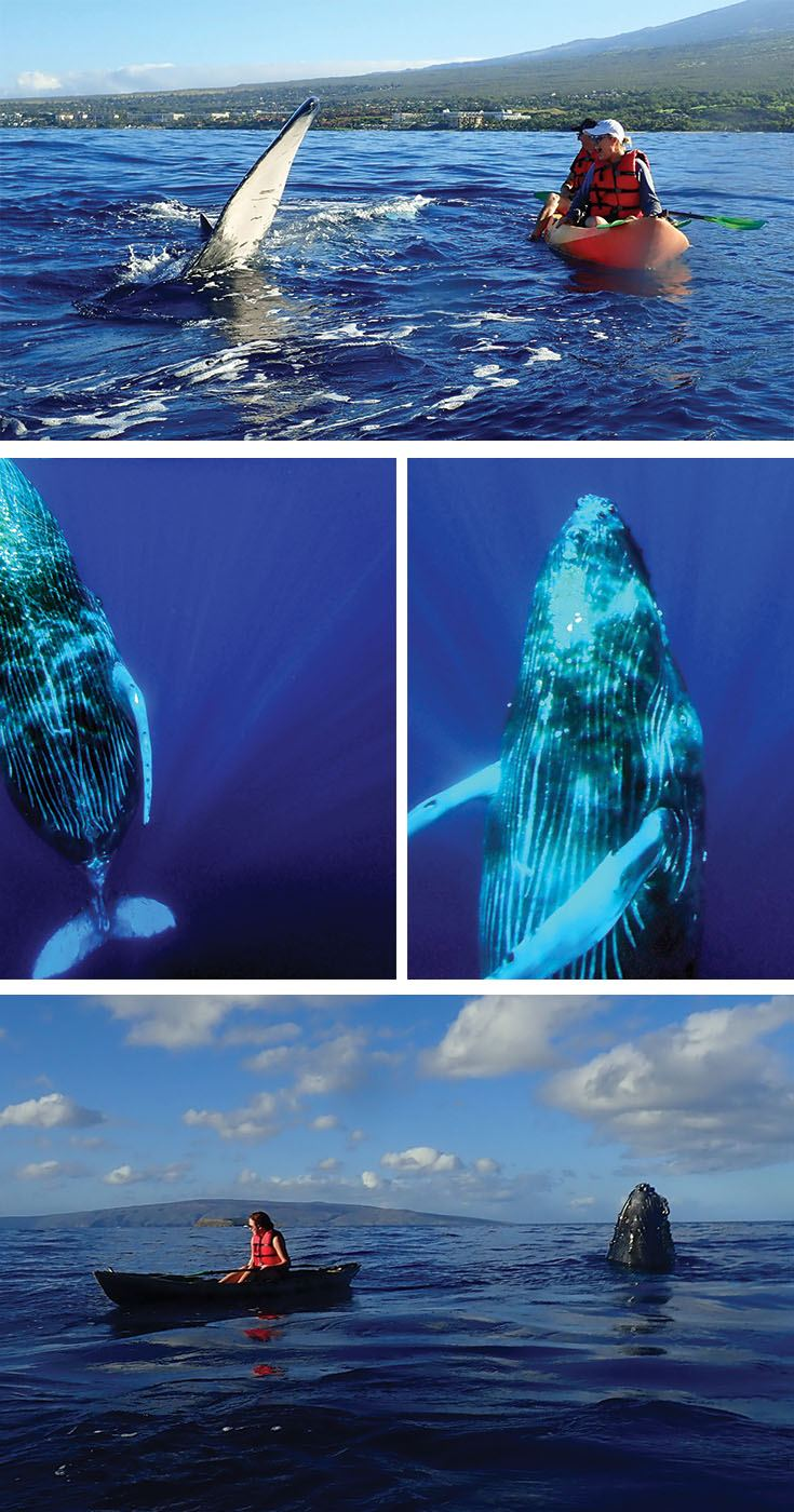 The most unforgettable Maui whale watch