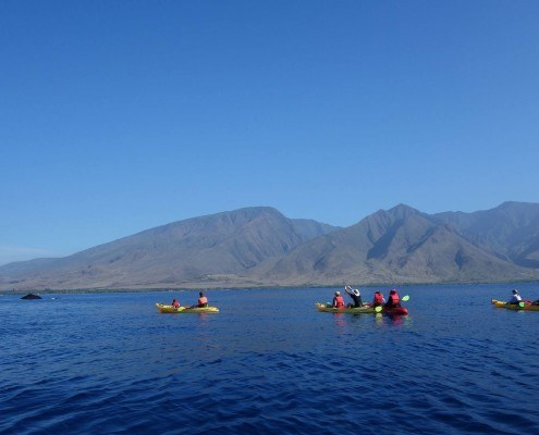 Olowalu Kayak Whale Group