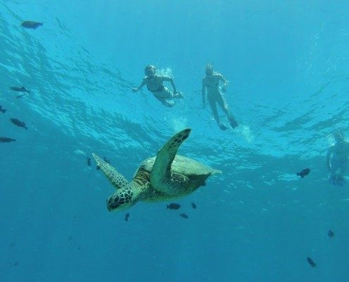Turtle Town Snorkelers