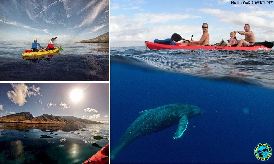 kayak tours maui