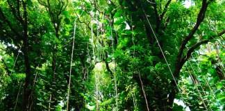 pump and dump Maui jungle