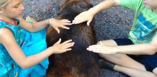 holistic Reiki hands on healing